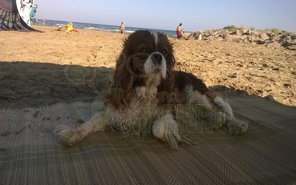 playa de les salines cubelles (2)
