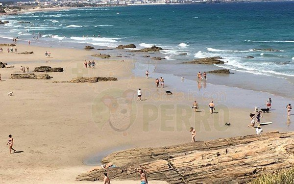 playa admite perros galicia