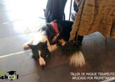 Dog school Madrid