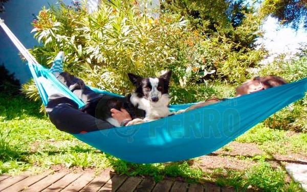 bungalows puravida en Caños de Meca admiten perros