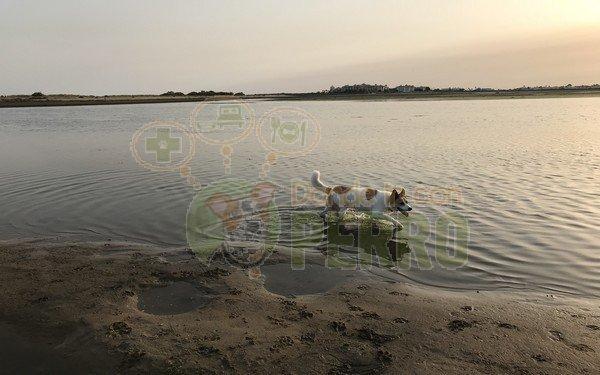 Playas para perros en Andalucia