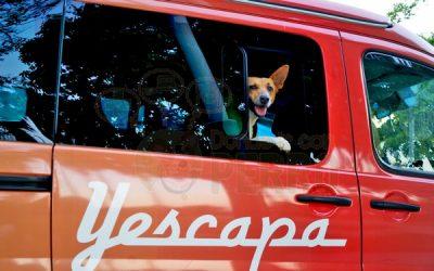 Con perro en autocaravana
