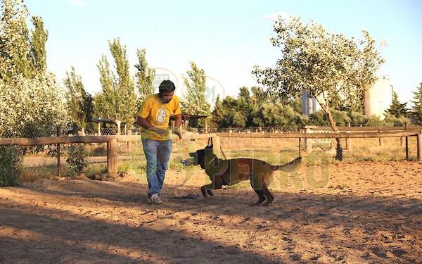 Matucan, servicios caninos